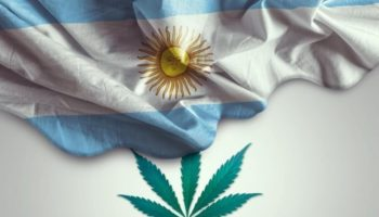 culture du cannabis à usage médical,culture à domicile,culture en argentine
