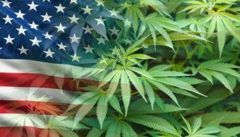 3 pays ont approuvés la légalisation,cannabis aux élections américaines